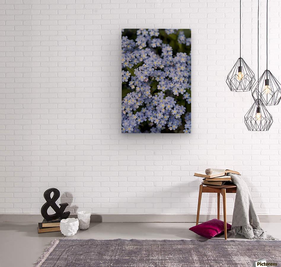 Victoria, British Columbia, Canada; Blooming Blue Flowers  Wood print