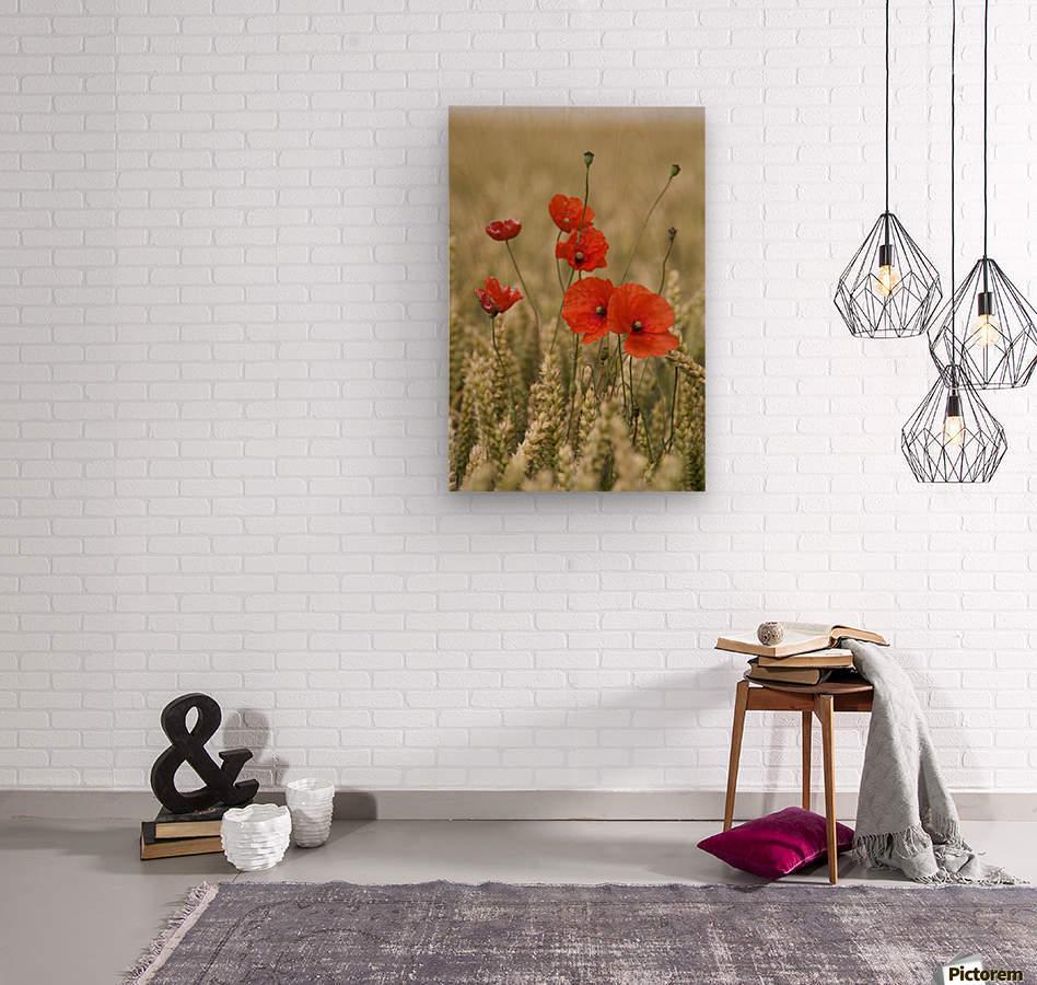 Wildflowers; Poppies In A Grain Field  Wood print