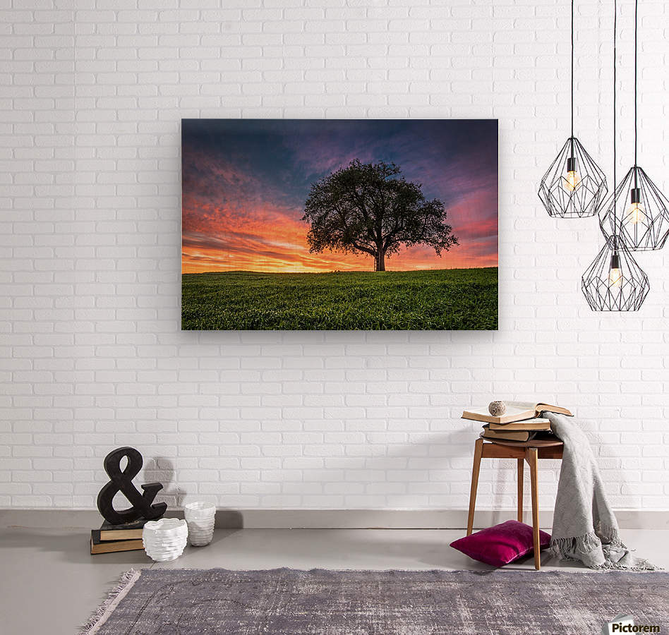 Lonely Tree at Sunset  Wood print