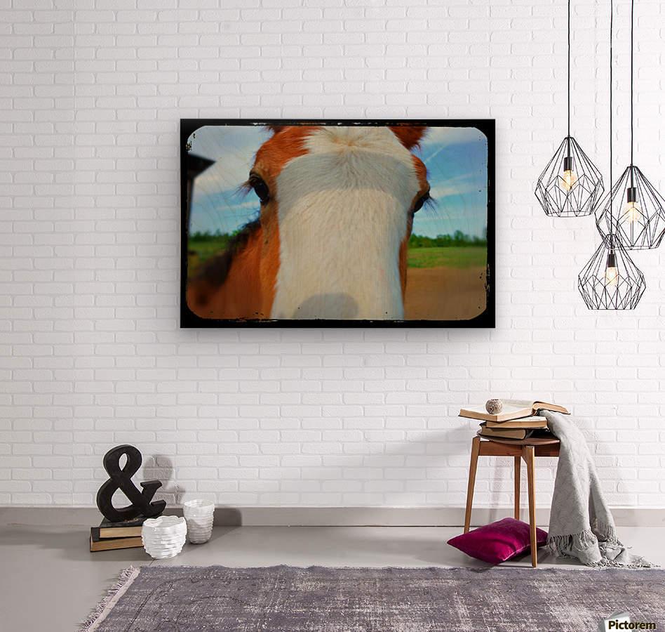 Baby Clydesdale  Impression sur bois