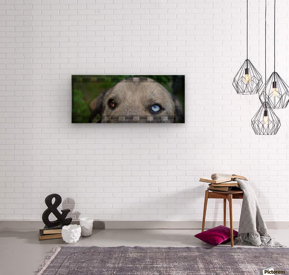 Blue Eyed Dog  Wood print