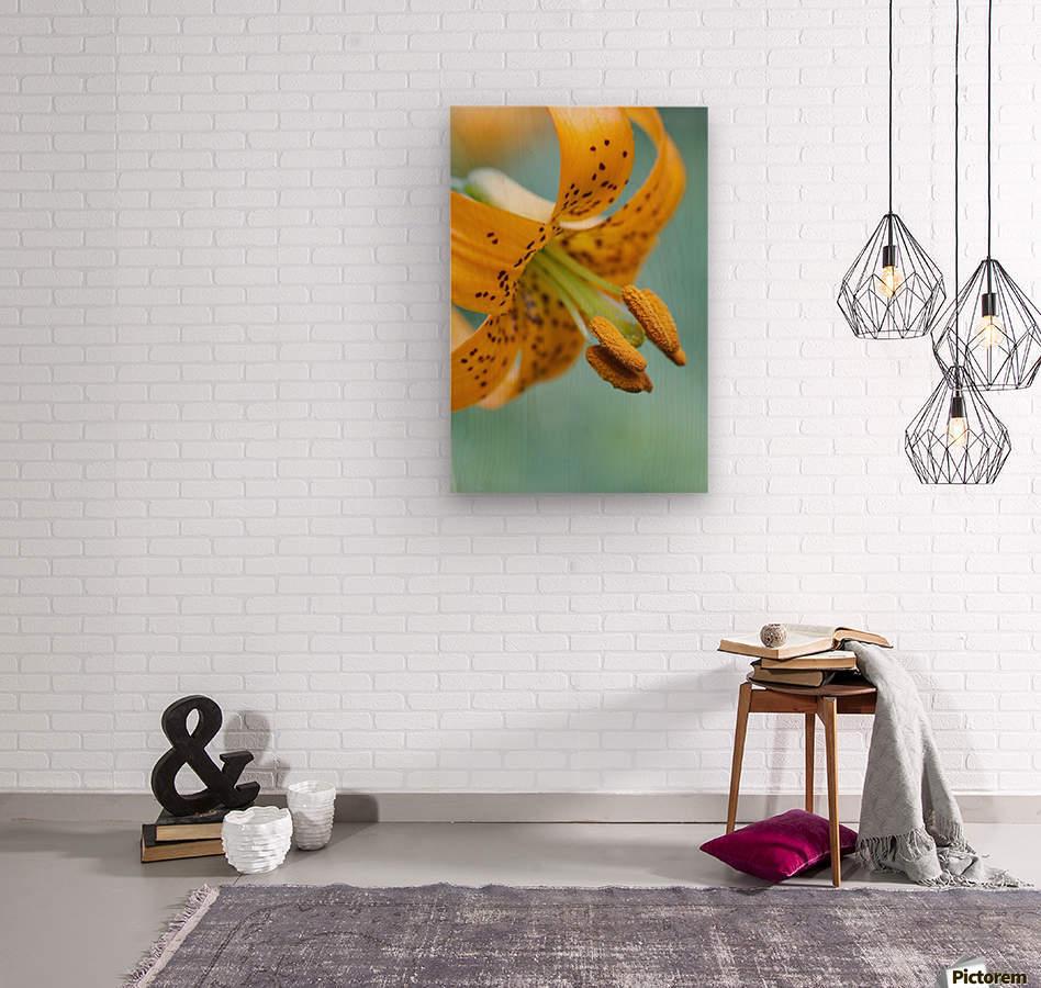 Oregon, United States Of America; A Lily On Mount Hood  Wood print