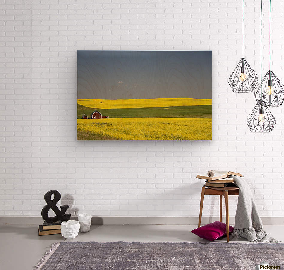 Flowering Canola Fields And A Red Barn; Alberta, Canada  Wood print