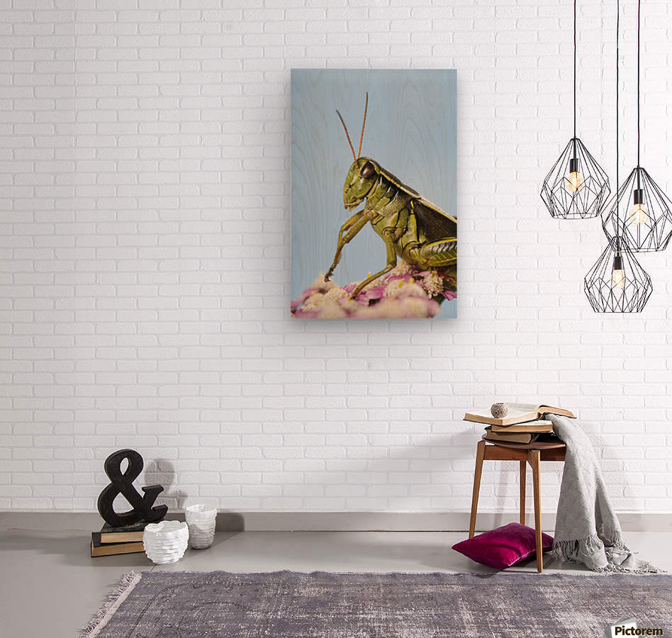 Grasshopper Close-Up.  Wood print