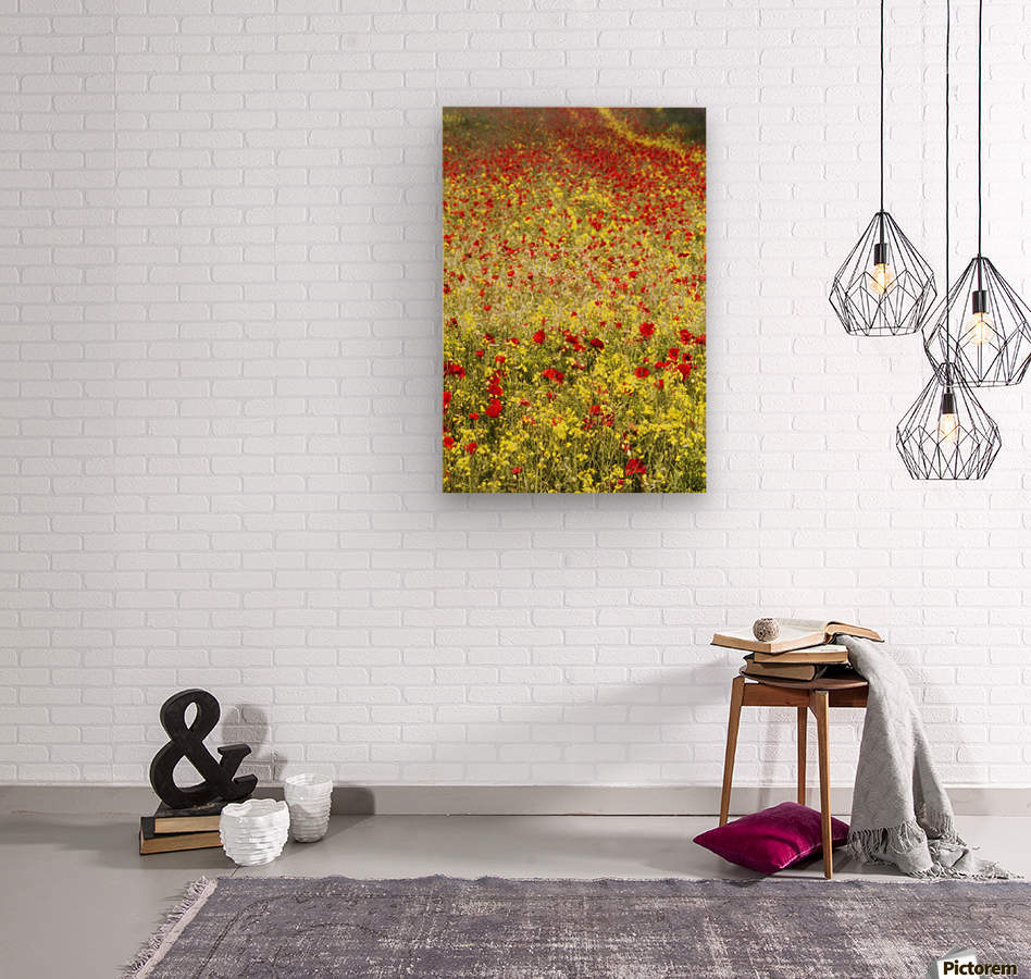 Abundance of red poppies in a field; Whitburn, Tyne and Wear, England  Wood print