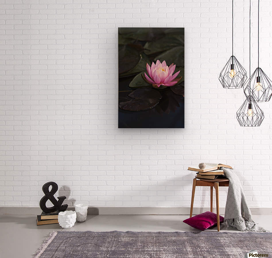A water lily blooms in a pond; Astoria, Oregon, United States of America  Wood print