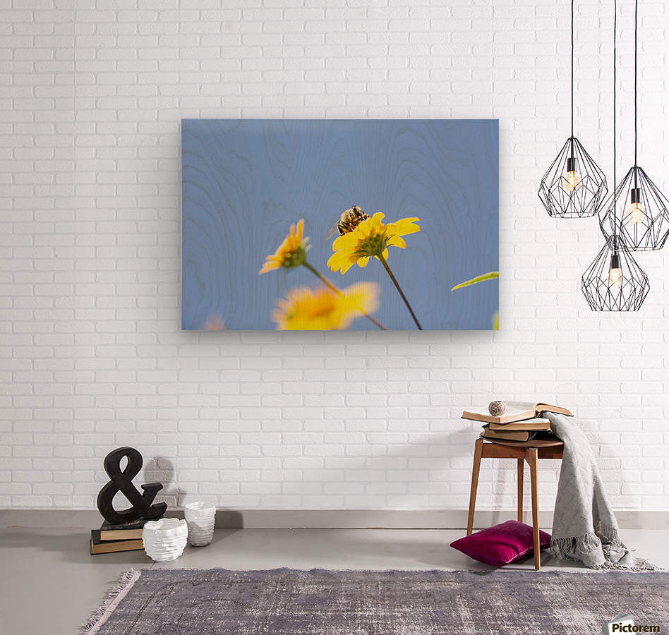 A bee is busy pollenating flowers as it goes about it's job collecting pollen; Bolivia  Wood print