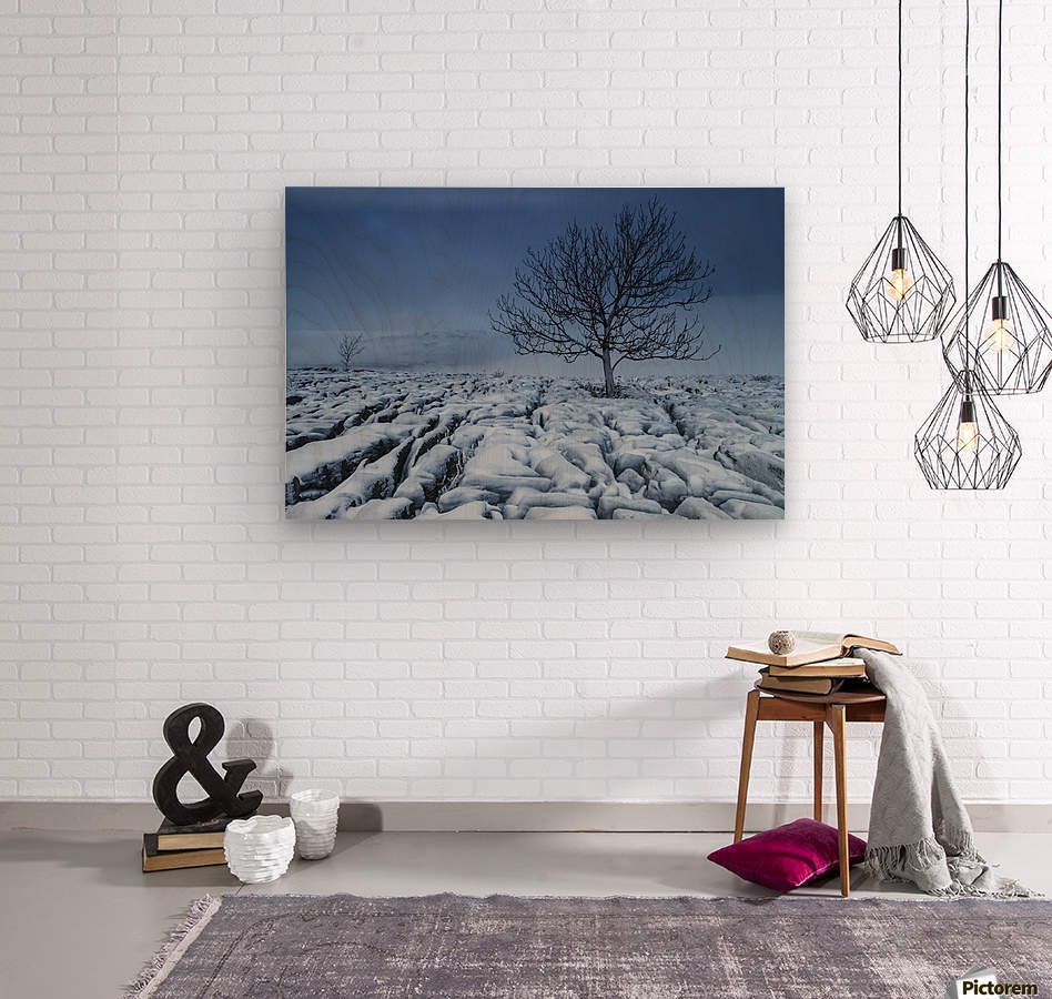 Cold Blue Trees, Yorkshire Dales, UK  Wood print