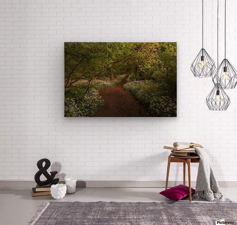 The Path to Fairytales, Ramsons Wood, Lancashire, UK  Wood print