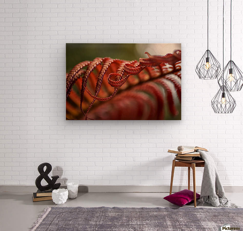 Close up of a crimson Amau fern; Hawaii, United States of America  Wood print