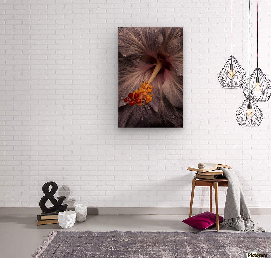 Close up of a Hibiscus flower with water droplets; Hawaii, United States of America  Wood print