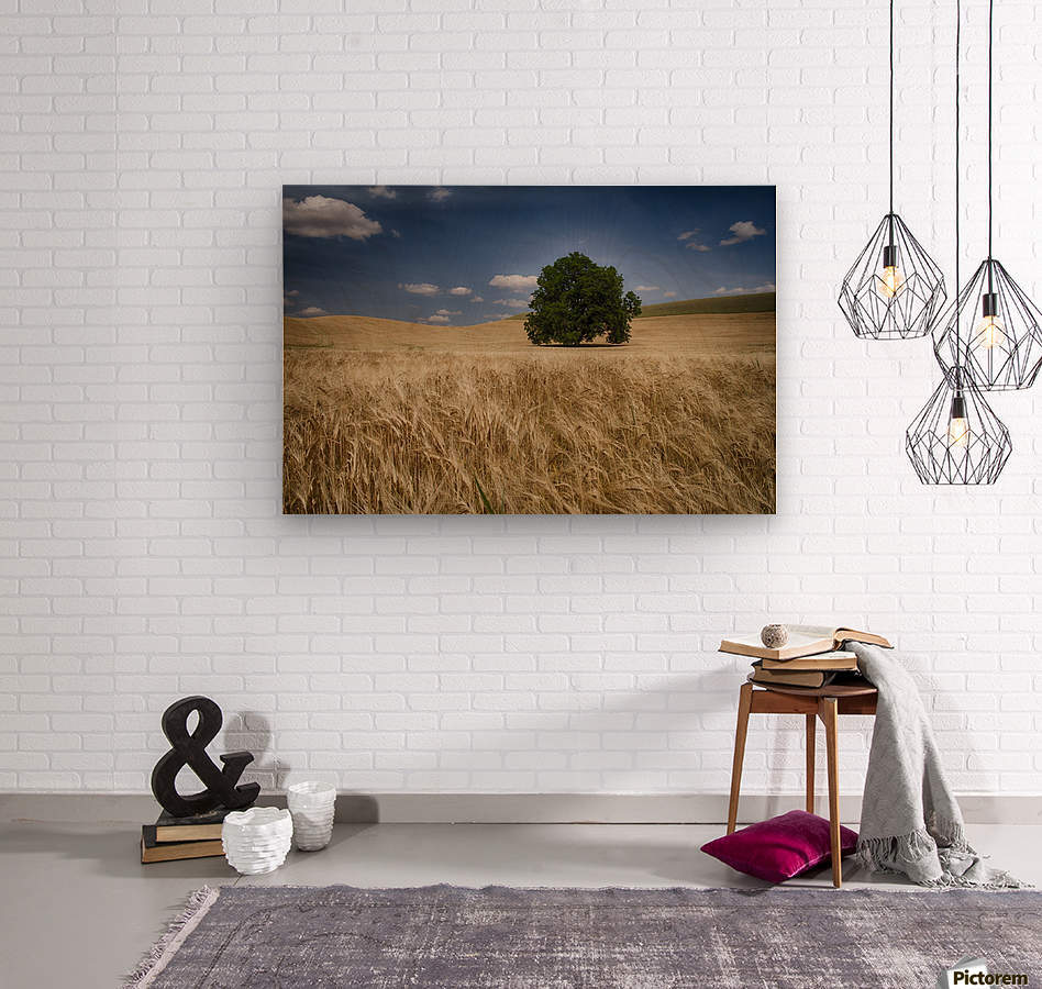 Lone tree in a wheat field; Palouse, Washington, United States of America  Wood print