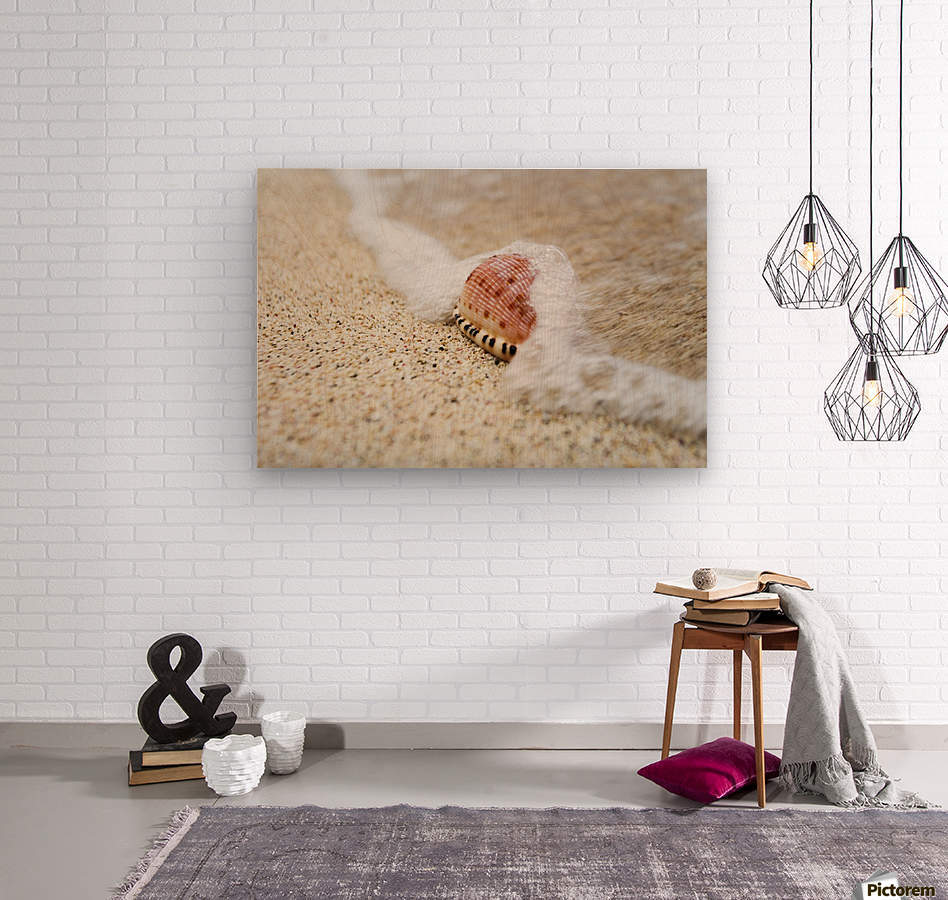 A close up of a cowry shell on the beach; St. Croix, Virgin Islands, United States of America  Wood print