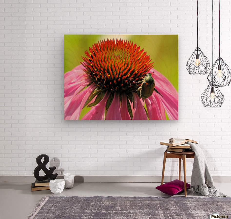 Echinacea and the Bee in Lincoln Park VP6  Wood print