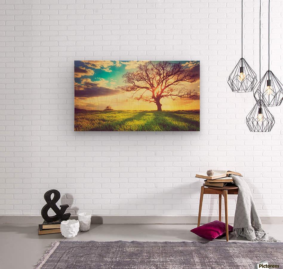 nature 05  Wood print