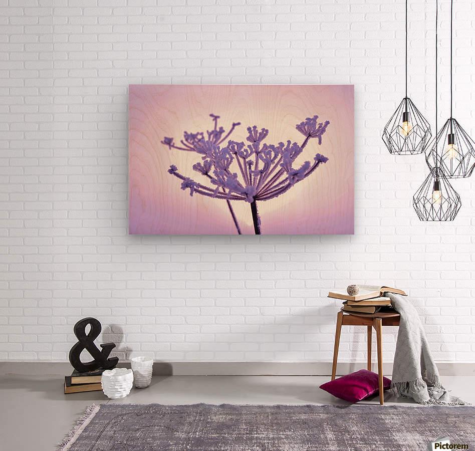 Pink tint  Wood print