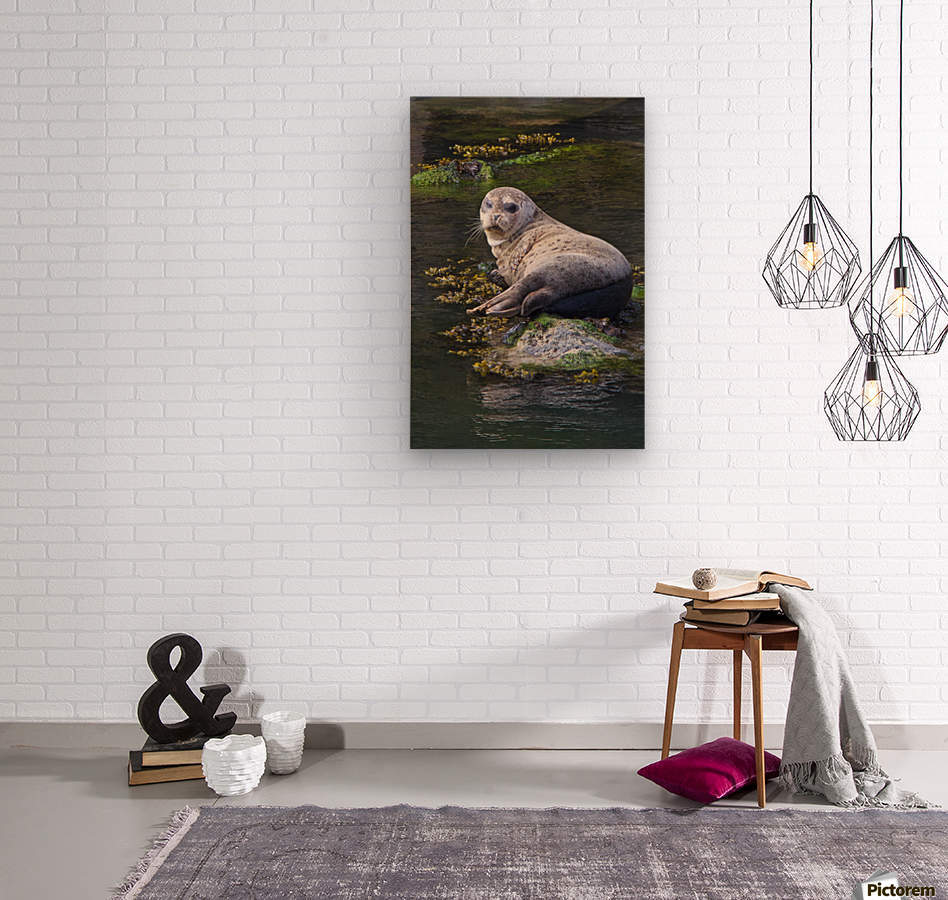 Sea lion portrait near Depoe Bay, OR  Wood print