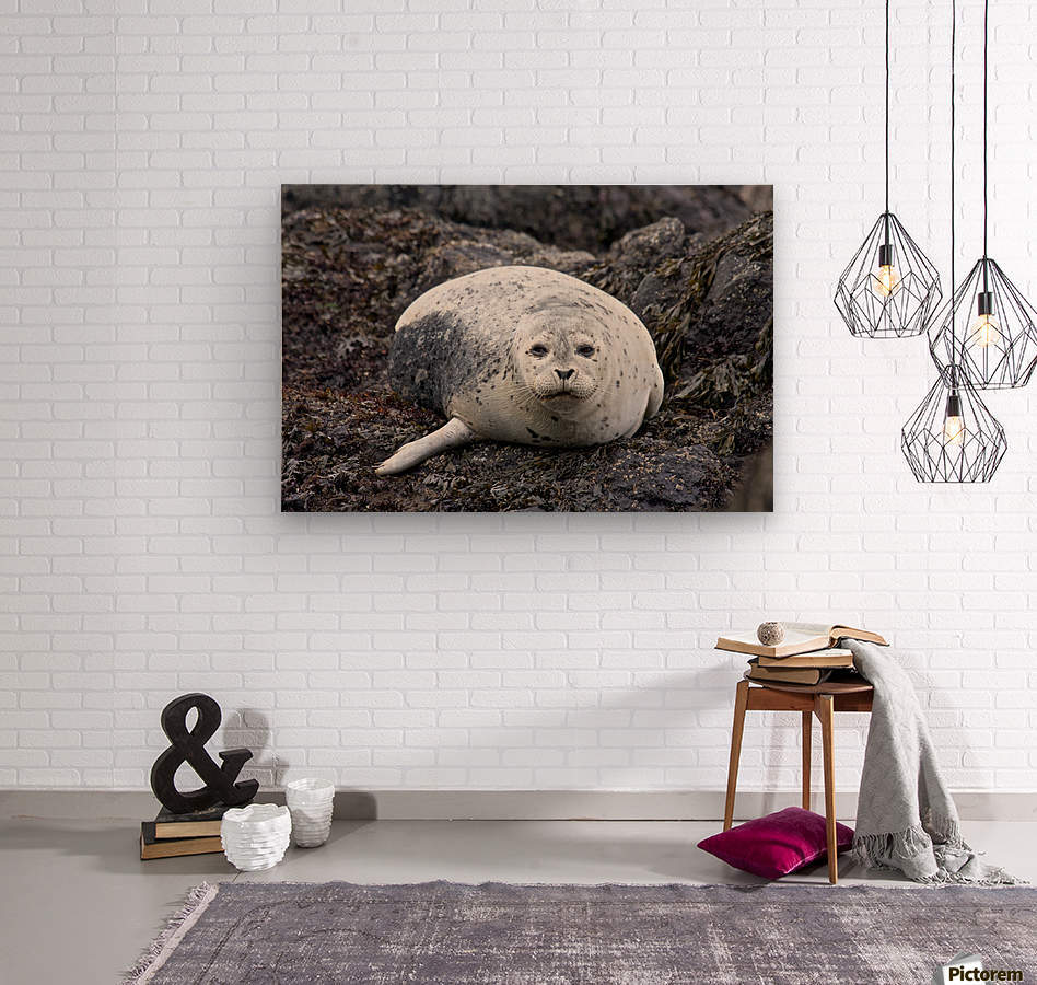 sea lion near Newport, OR  Wood print