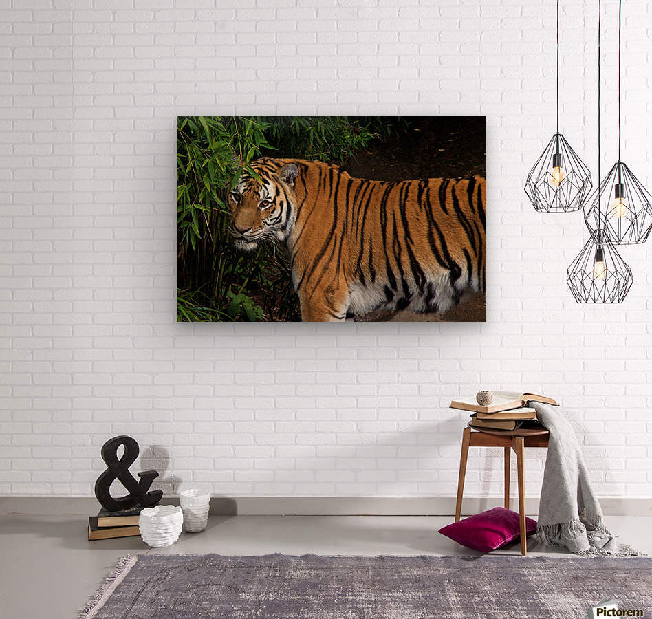 Female Tiger  Wood print