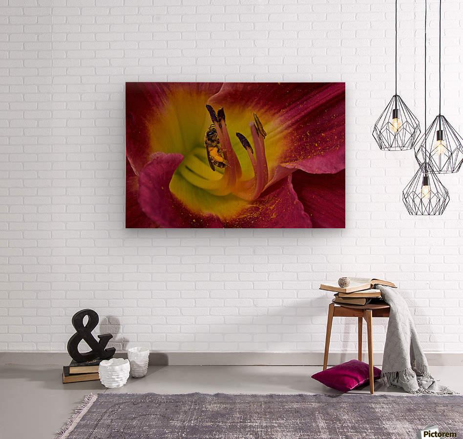 Bee Inside Corn Lily - Landscape  Wood print