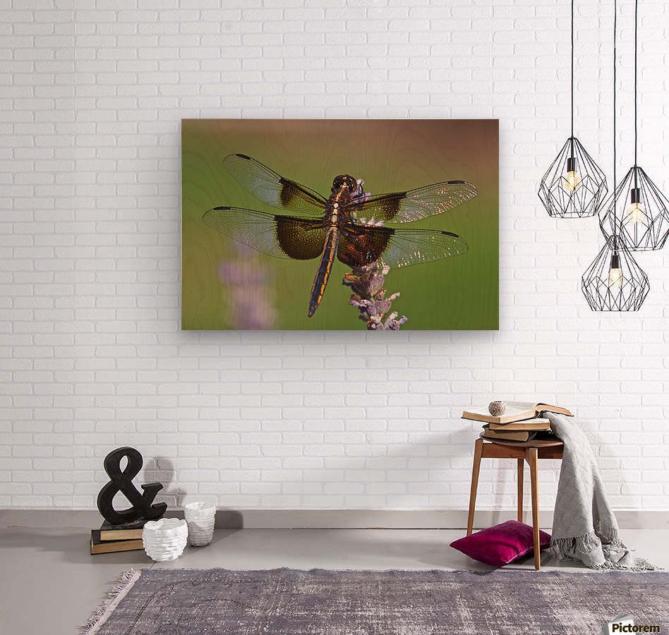 Dragonfly on Lavender  Wood print