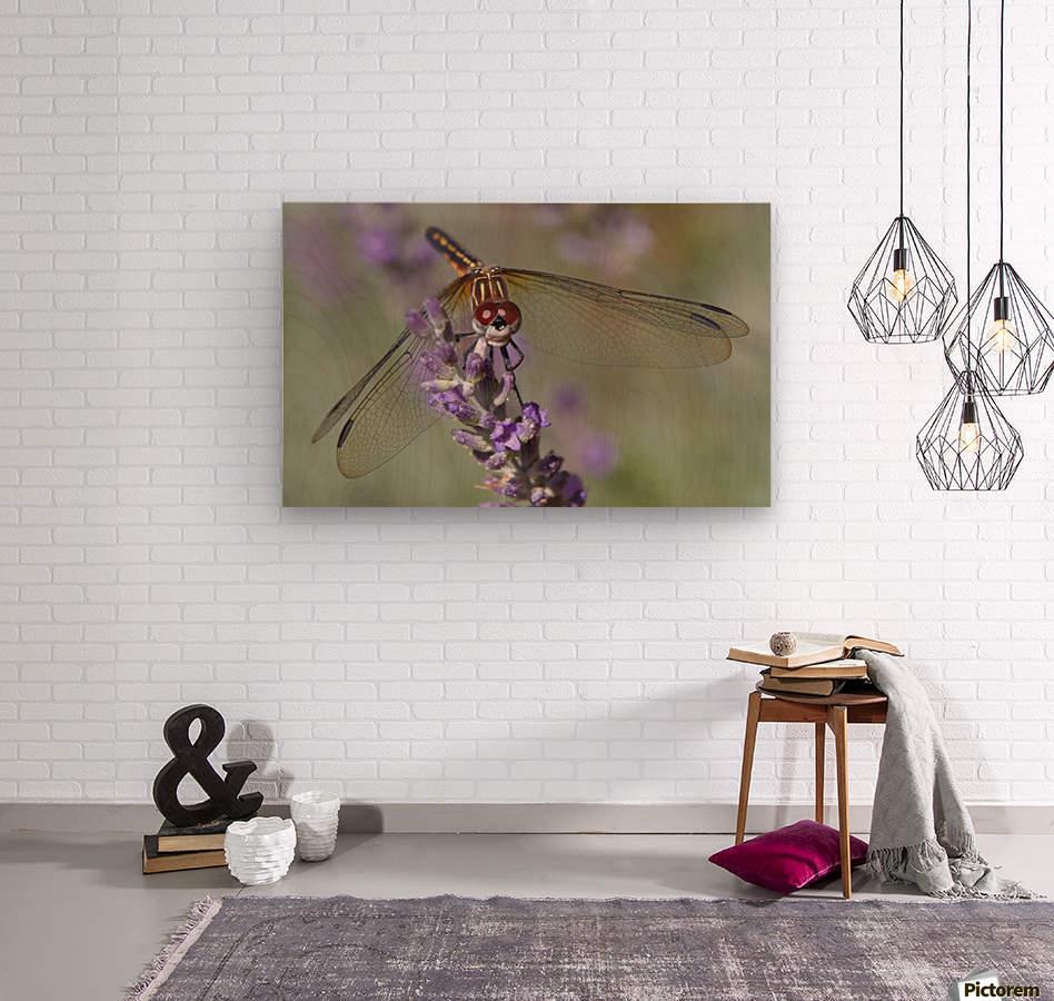 Dragonfly resting on flower.  Wood print