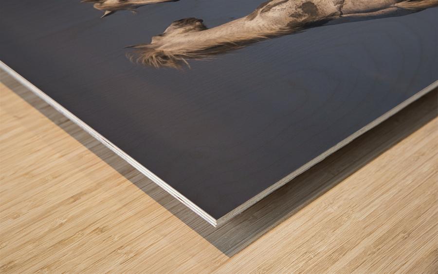 Confrontation Wood print