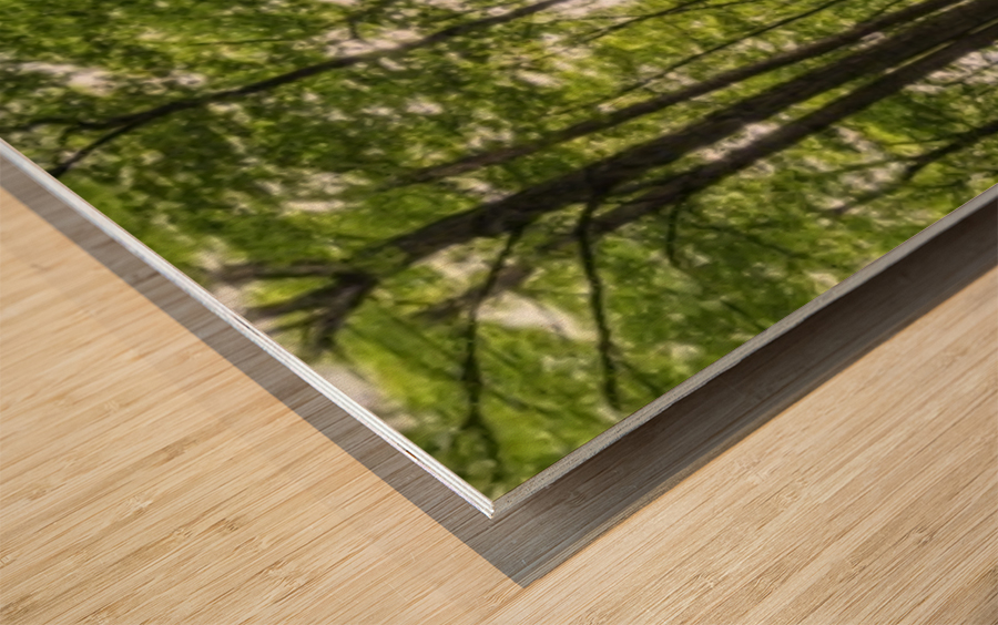Panoramic image of a deciduous forest; Ontario, Canada Wood print
