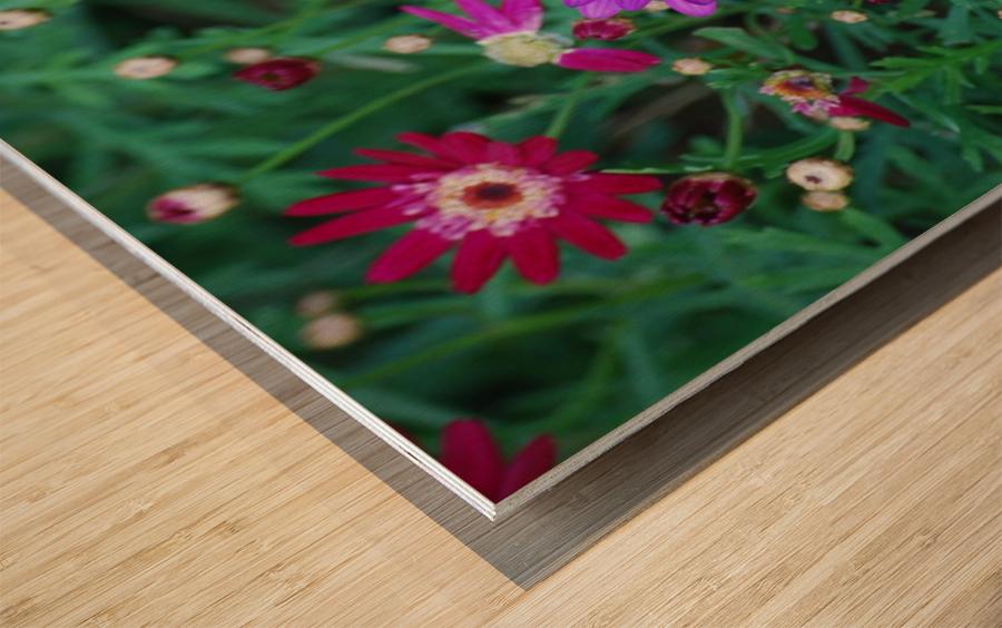 Purple Flowers in Dana Point CA Wood print