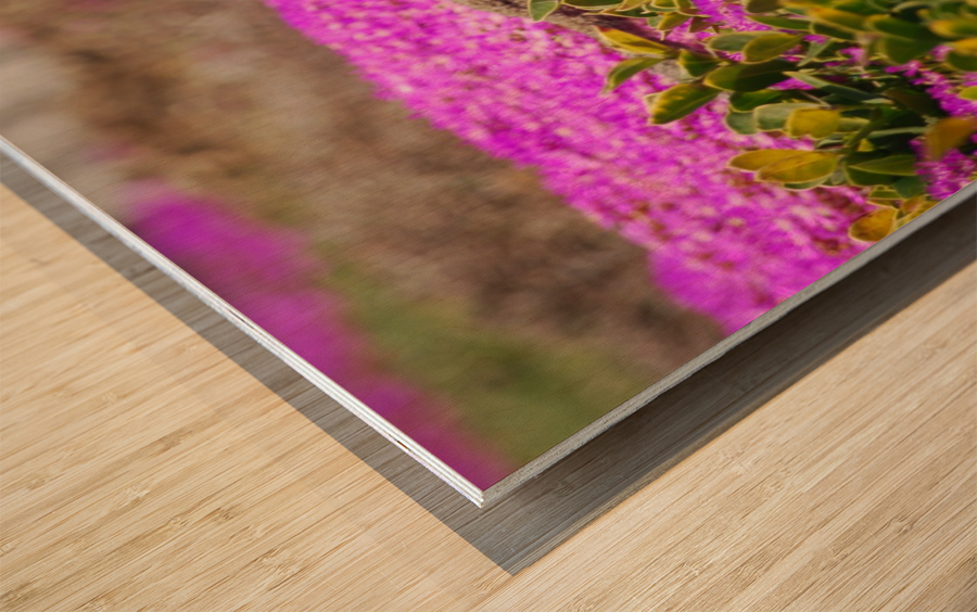Pink Wild Flowers on a Hill With a Squirrel Wood print