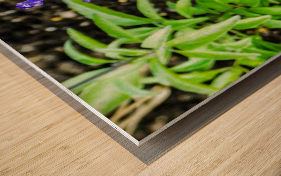 DSCN0817 Wood print