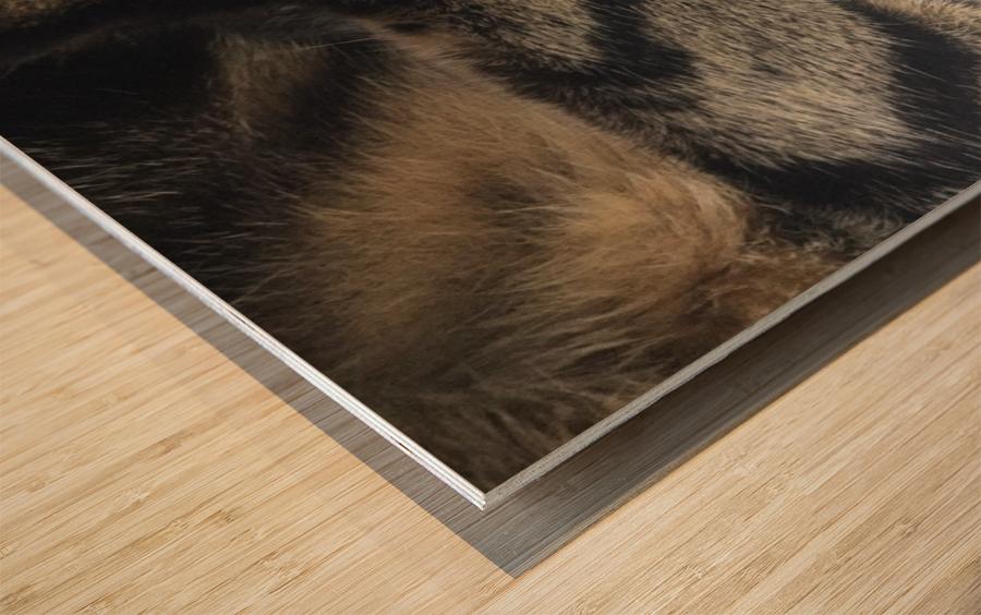 Gizmo - sleepy Impression sur bois