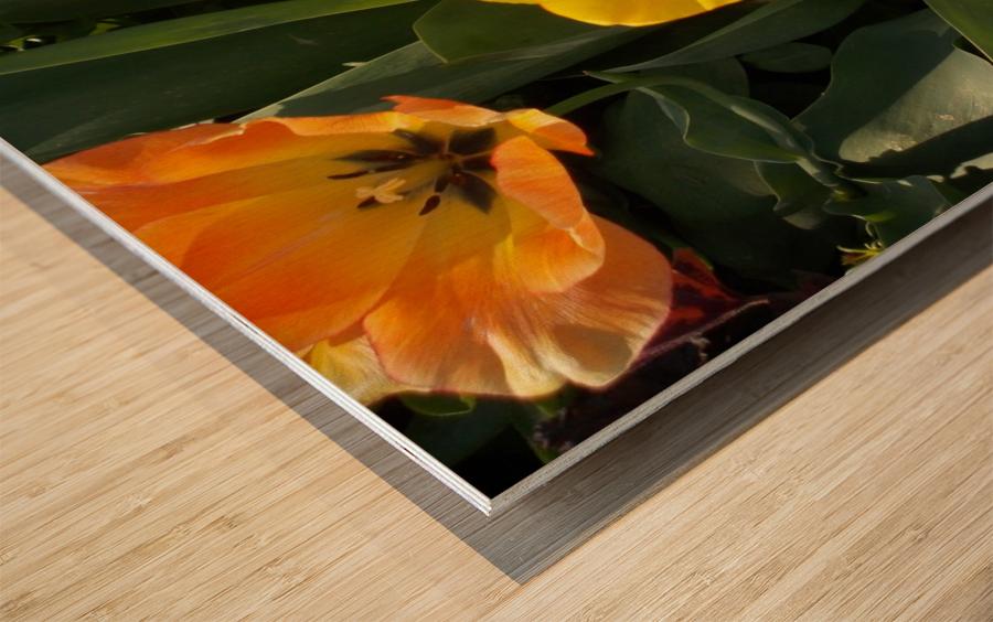 DSCN0763 Wood print