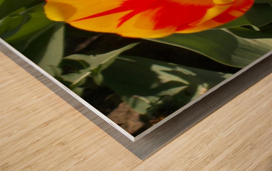 DSCN0767 Wood print