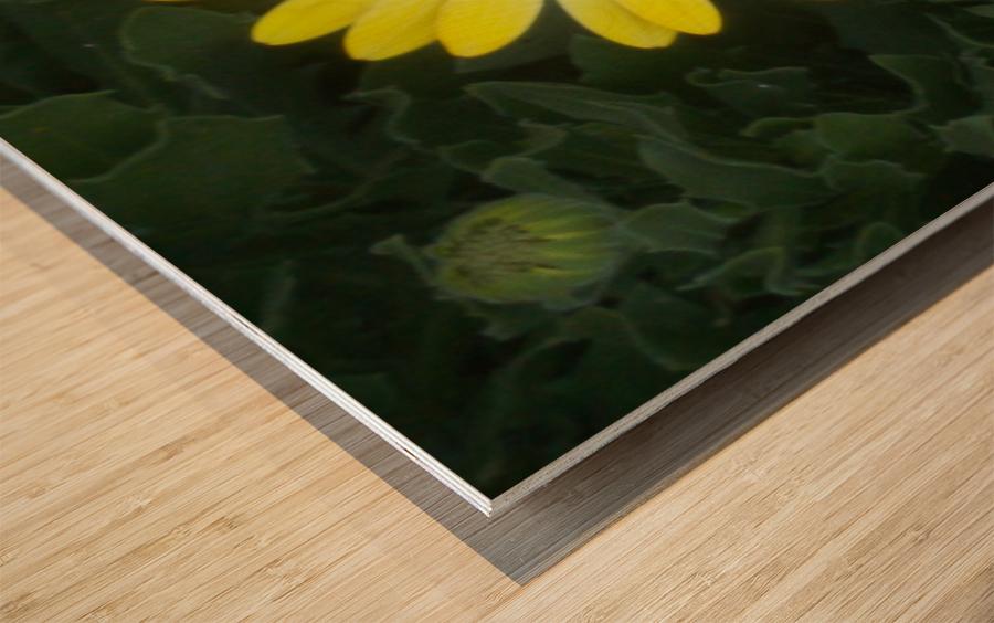 DSCN0662 Wood print