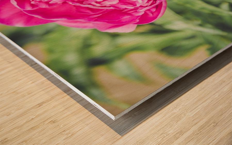Deadly Beautiful Peonies Wood print