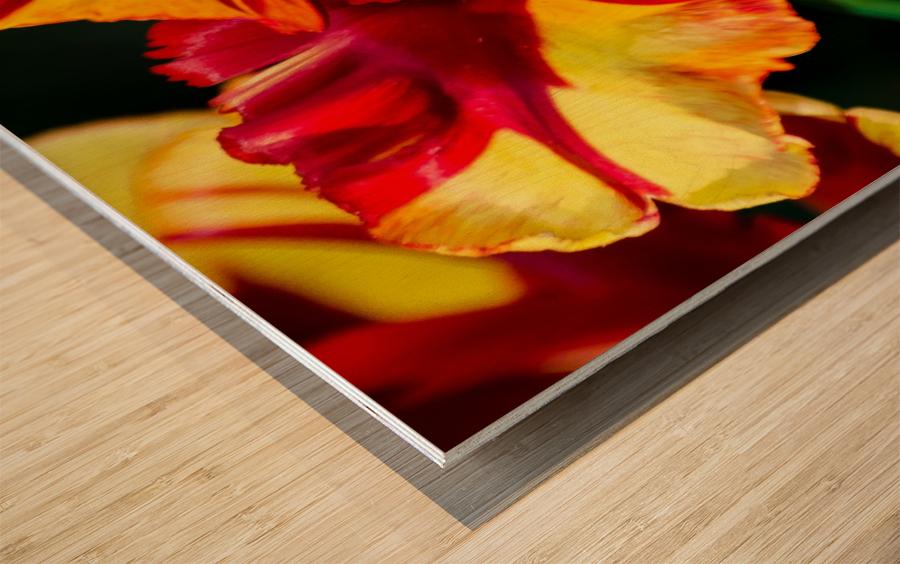 Tulip in Fringed Dress Wood print