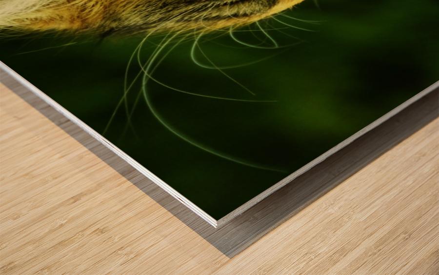 sofn-ECA50C68 Wood print