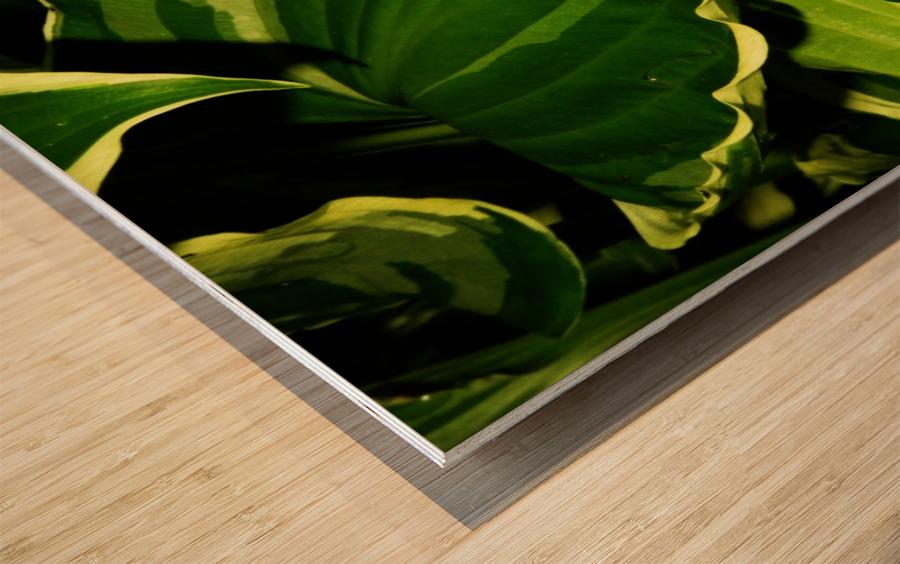 sofn-4312BAF0 Wood print