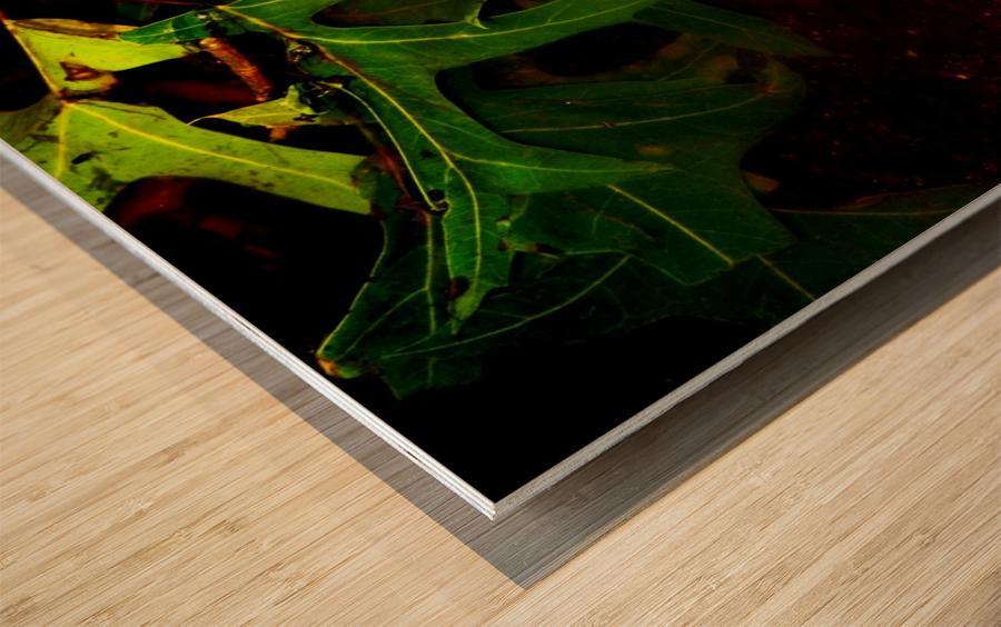 C (14) Wood print