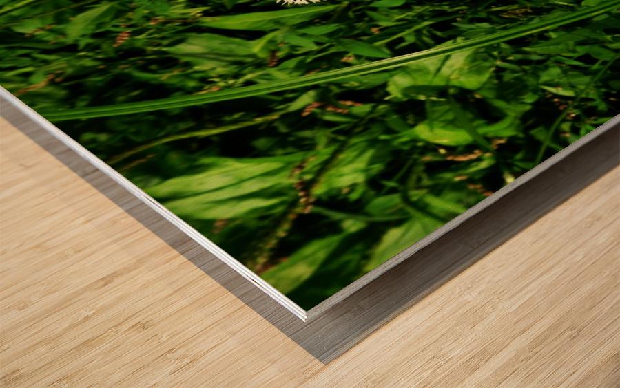 F (9) Wood print