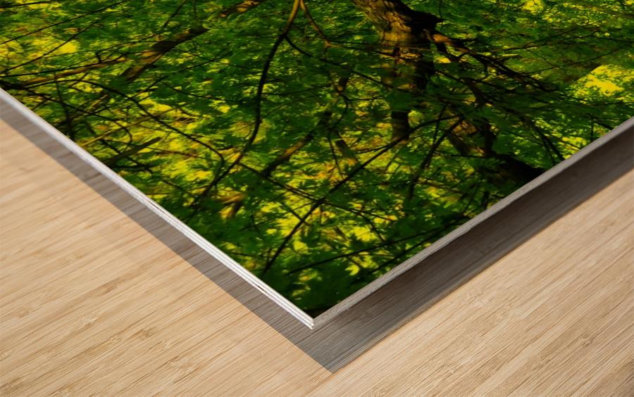 F (3) Wood print