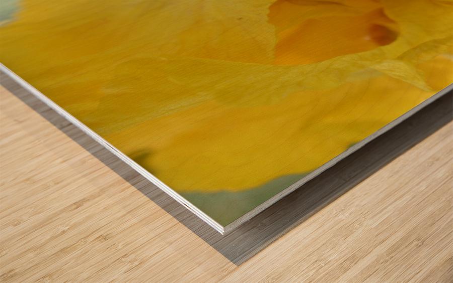 Yellow Iris Photograph Wood print