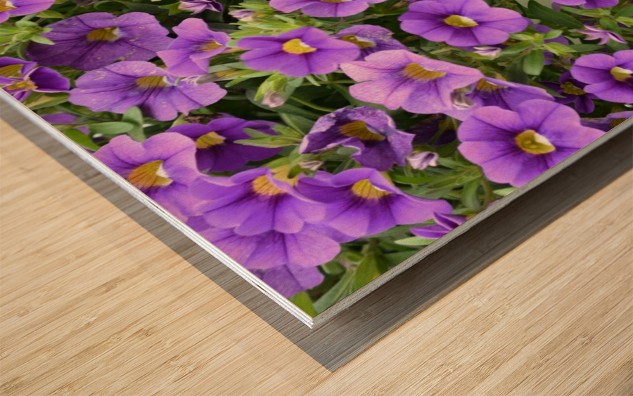 Beautiful Purple Flowers Photograph Wood print