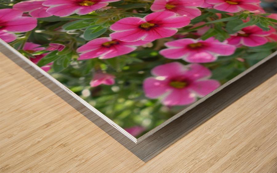 Beautiful Pink Flowers Photograph Wood print