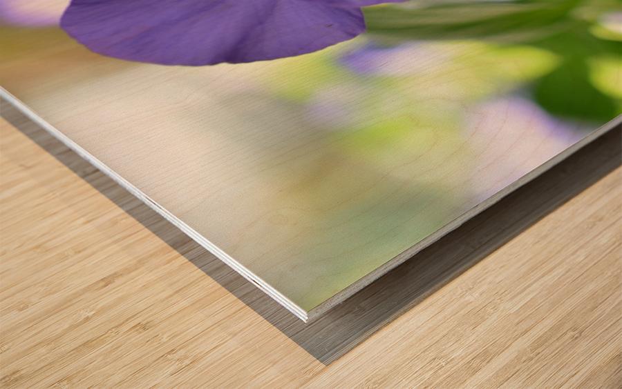 Blue Pansy Photograph Impression sur bois