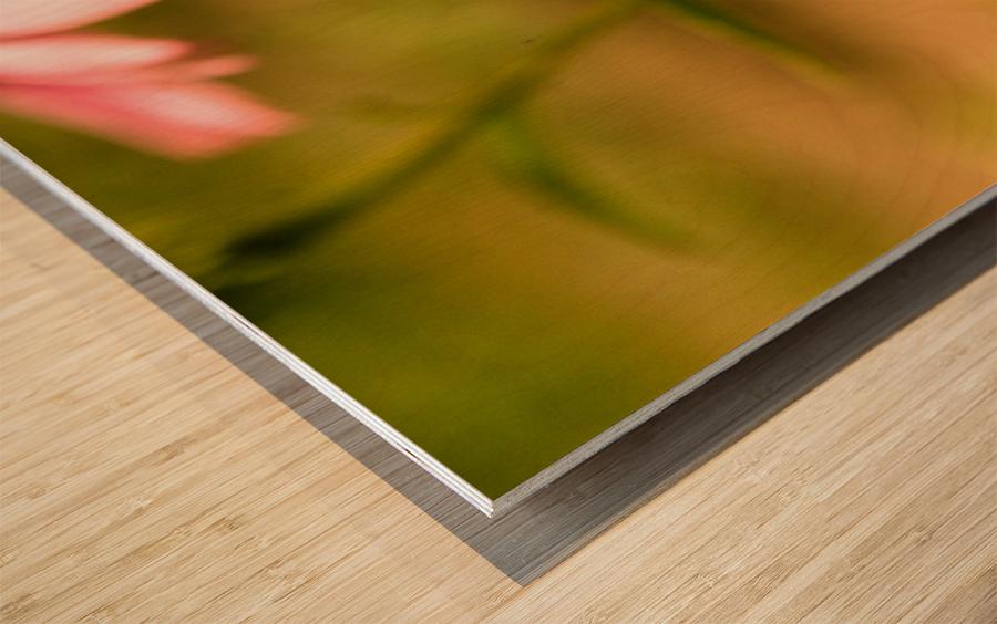 Like Sunflowers Wood print