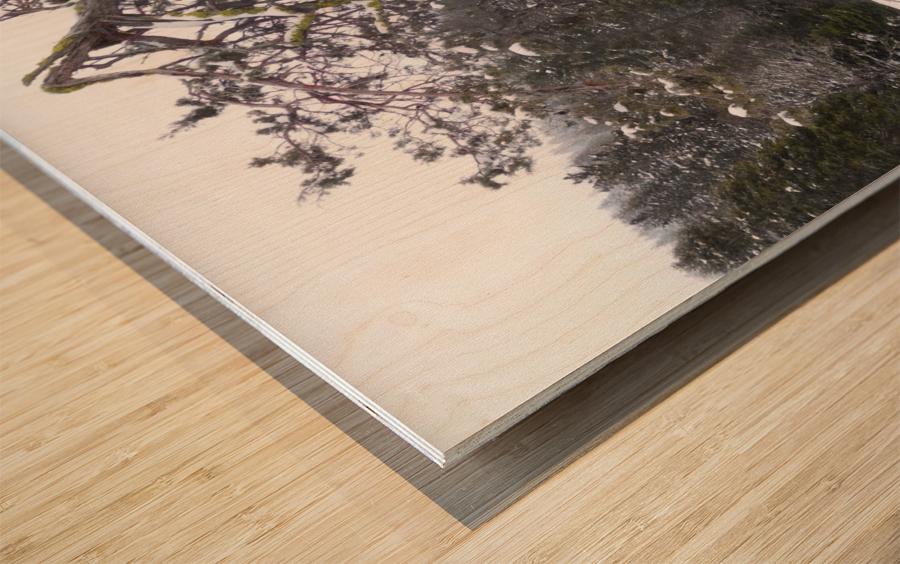 Ancient Mountain Juniper Wood print