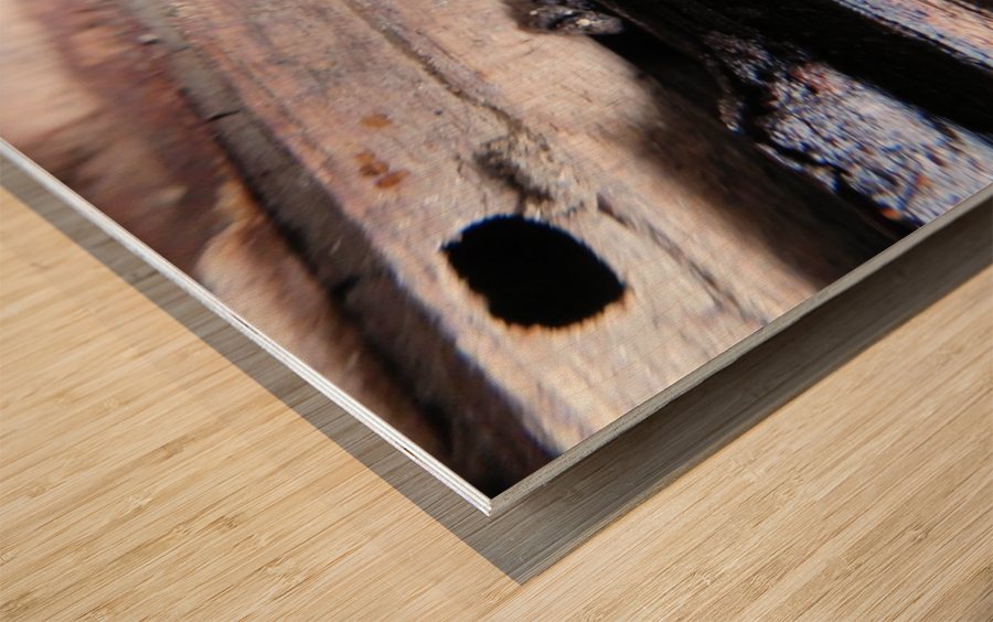 Brave Little Mushroom Wood print