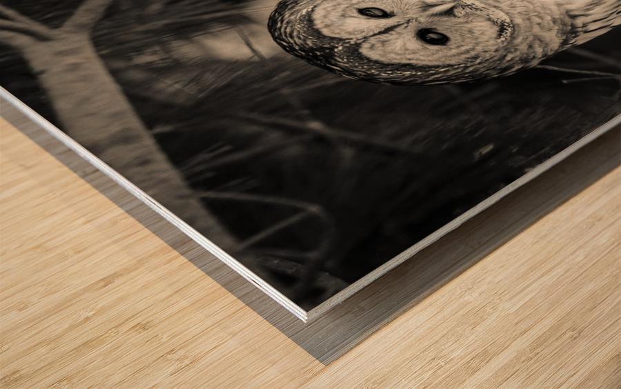 Spotted Owl - 2 Wood print